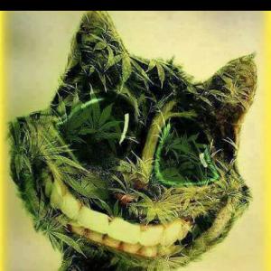 Le sourire du chat
